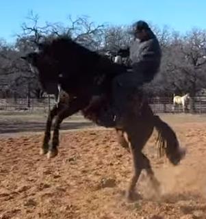 a bucking horse