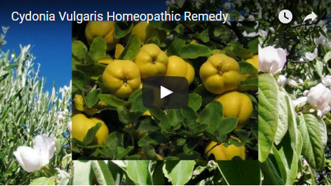 Cydonia Vulgaris Homeopathic Remedy