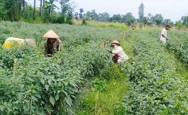 Media Online Untuk Sarana Pertanian