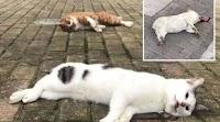 Takut Corona, Warga China Ramai-ramai Lempar Kucing dari Apartemen