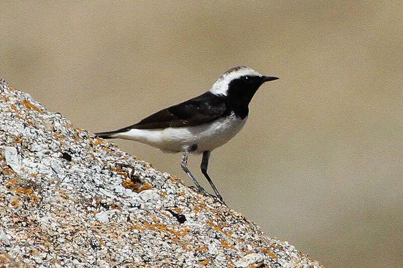 पक्षी, प्रवास पर क्यों जाते है? विश्व के 10 प्रवासी पक्षी - Why do Birds Migrate? Top 10 Migratory Birds in the World