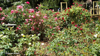 Rose border, Boothe Memorial Park and Museum - Stratford, CT