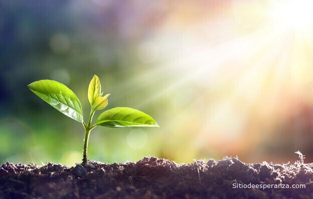 Planta recibiendo luz del sol