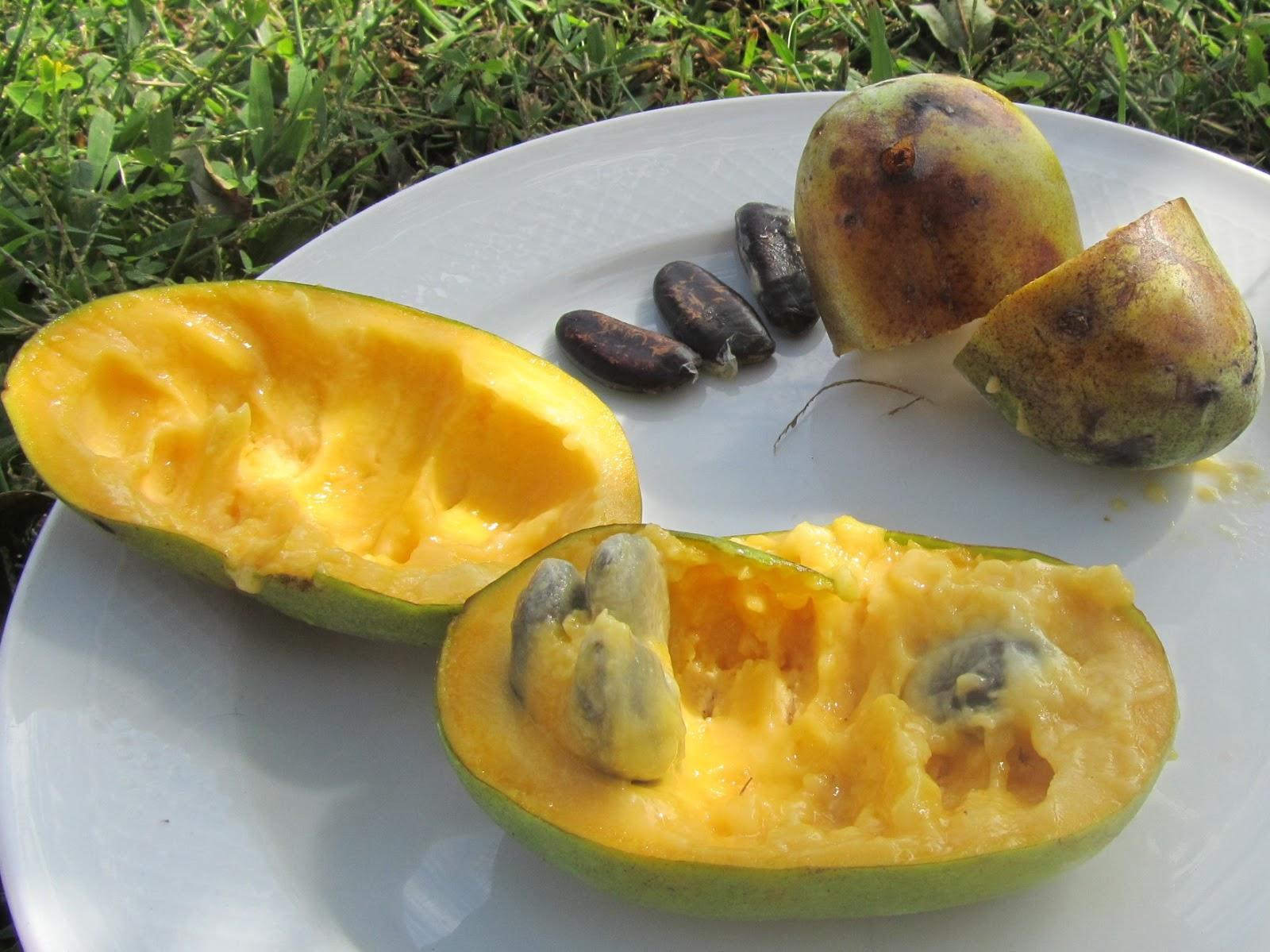 Come Coltivare Un Banano il gusto della natura: come coltivare l'asimina triloba