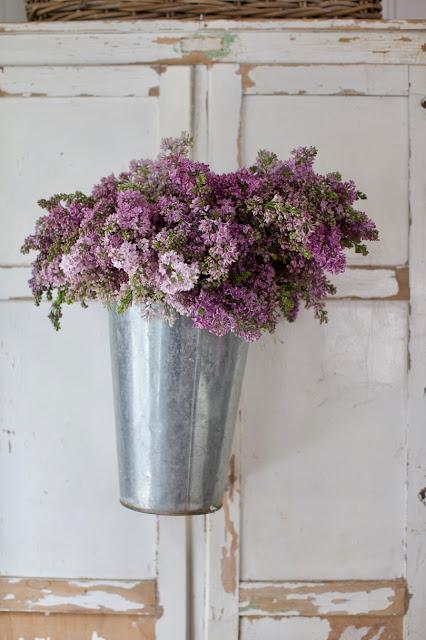 lilacs in galvanized bucket on cupboard