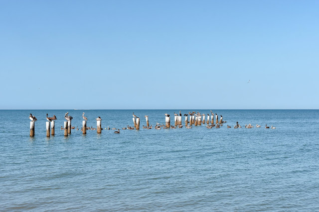 Old Pilings Naples, Florida