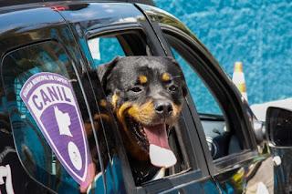 Após 8 anos de serviço, cão da GCM se aposenta em Itapevi