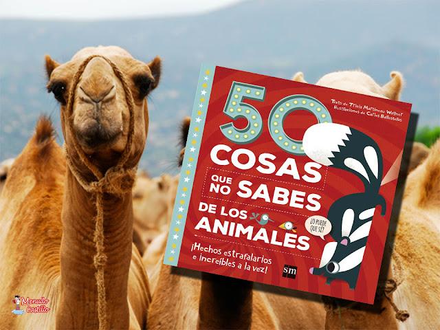 Los camellos son animales de lo más curiosos