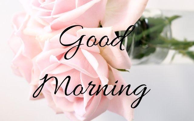 GOOD MORNING ROSE IMAGES