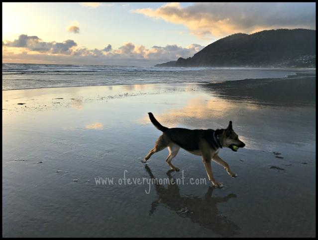 German Shepherd running on a sandy beach