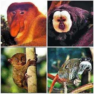 Необычные приматы