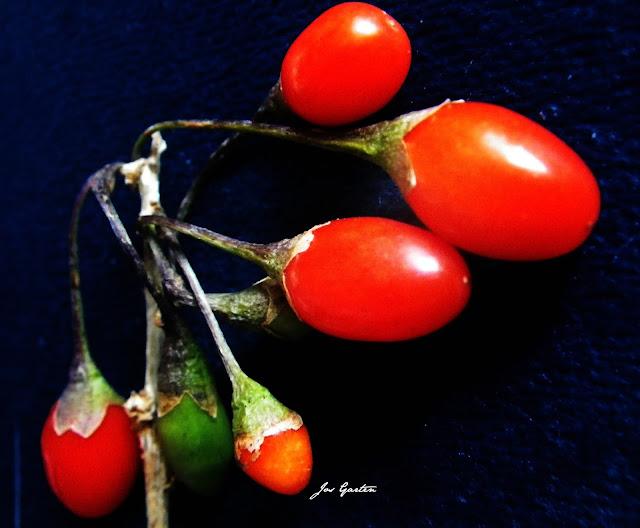 Jos Garten;Früchte;Gojibeeren;