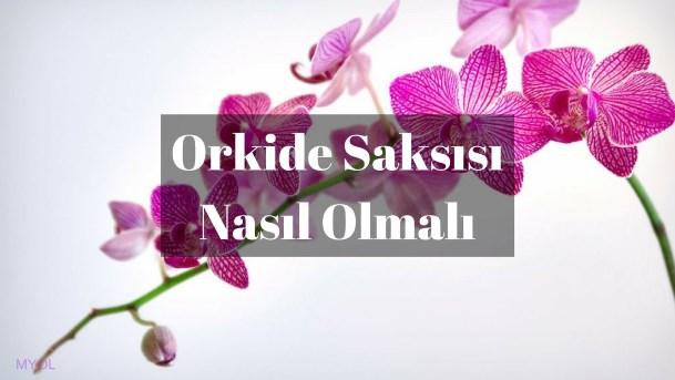Orkide Saksısı Nasıl Olmalı?