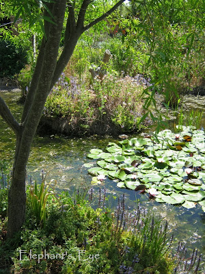 Ungardening Pond with waterlily