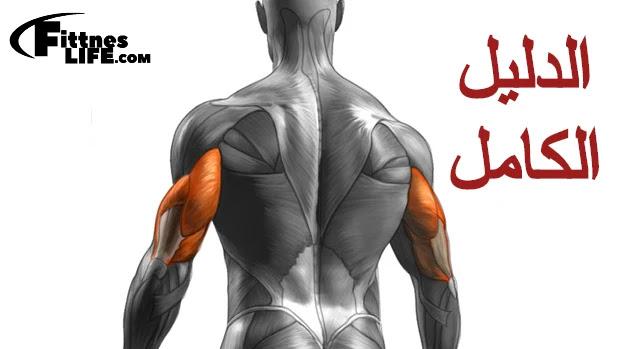 تكبير عضله الذراع