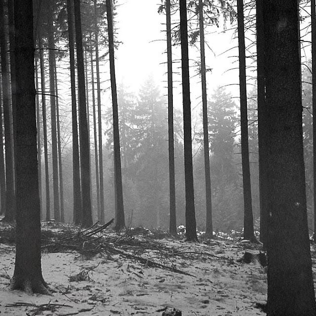 Forest Wallpaper Engine