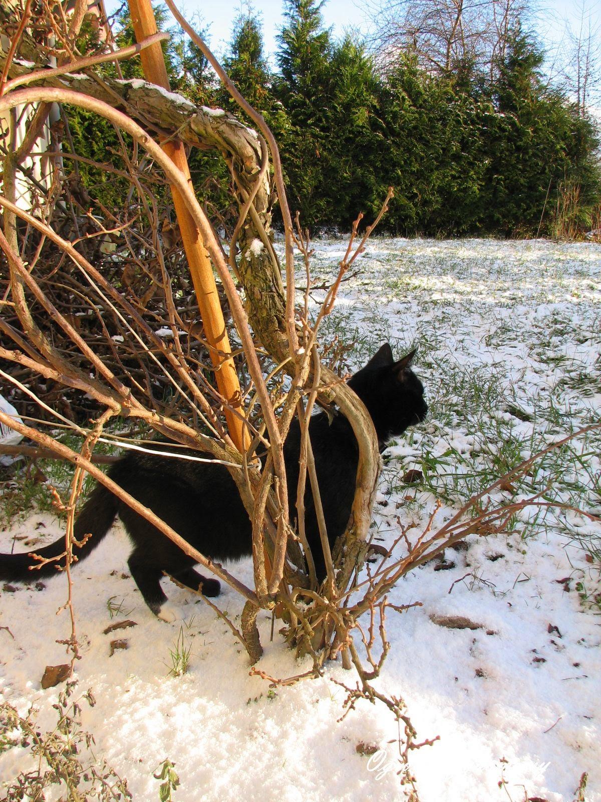 dzień kota, święto kota, ogród przydomowy