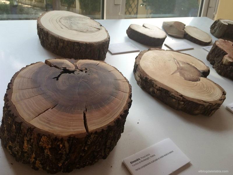 Anillos de crecimiento árbol Prunus dulcis (almendro) La Memòria dels Arbres Miguel Ortega Martinez