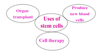 Uses of stem cell