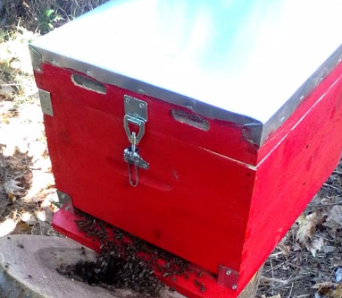 Μεταφορά μελισσών από κορμό πλατάνου σε κυψέλη photos
