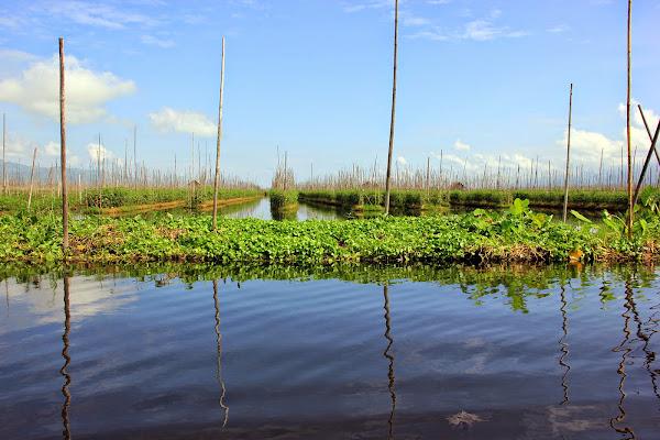 Jardines flotantes y campos de cultivo en el Lago Inle (Myanmar)