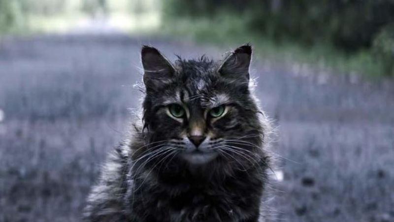 Leo, Aktor Kucing Zombi di 'Pet Sematary' Mati Misterius