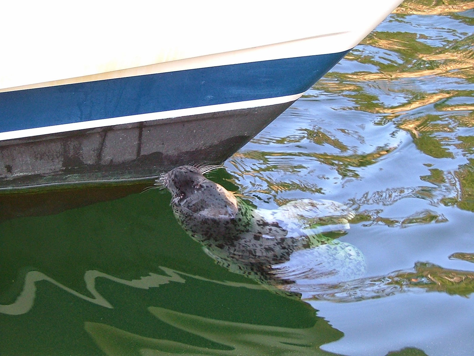 Seal pup #1
