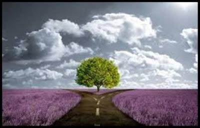 Caminho entre flores dividido por uma árvore, nuvens brancas em céu de profundo azul.