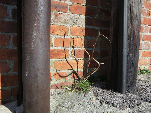 Dead twig rising from small green leaves between a metal pole and a wooden pole in front of a red brick wall