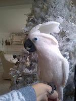 Sandra Lee White Christmas Tree with Bird