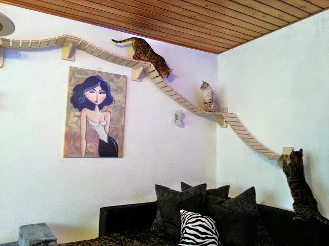 Rumah Kucing Keren