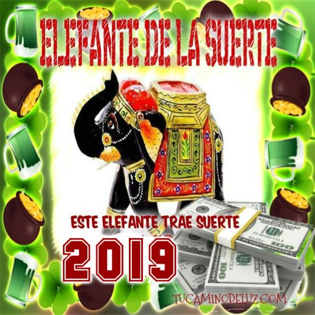 elefante de la suerte 2019