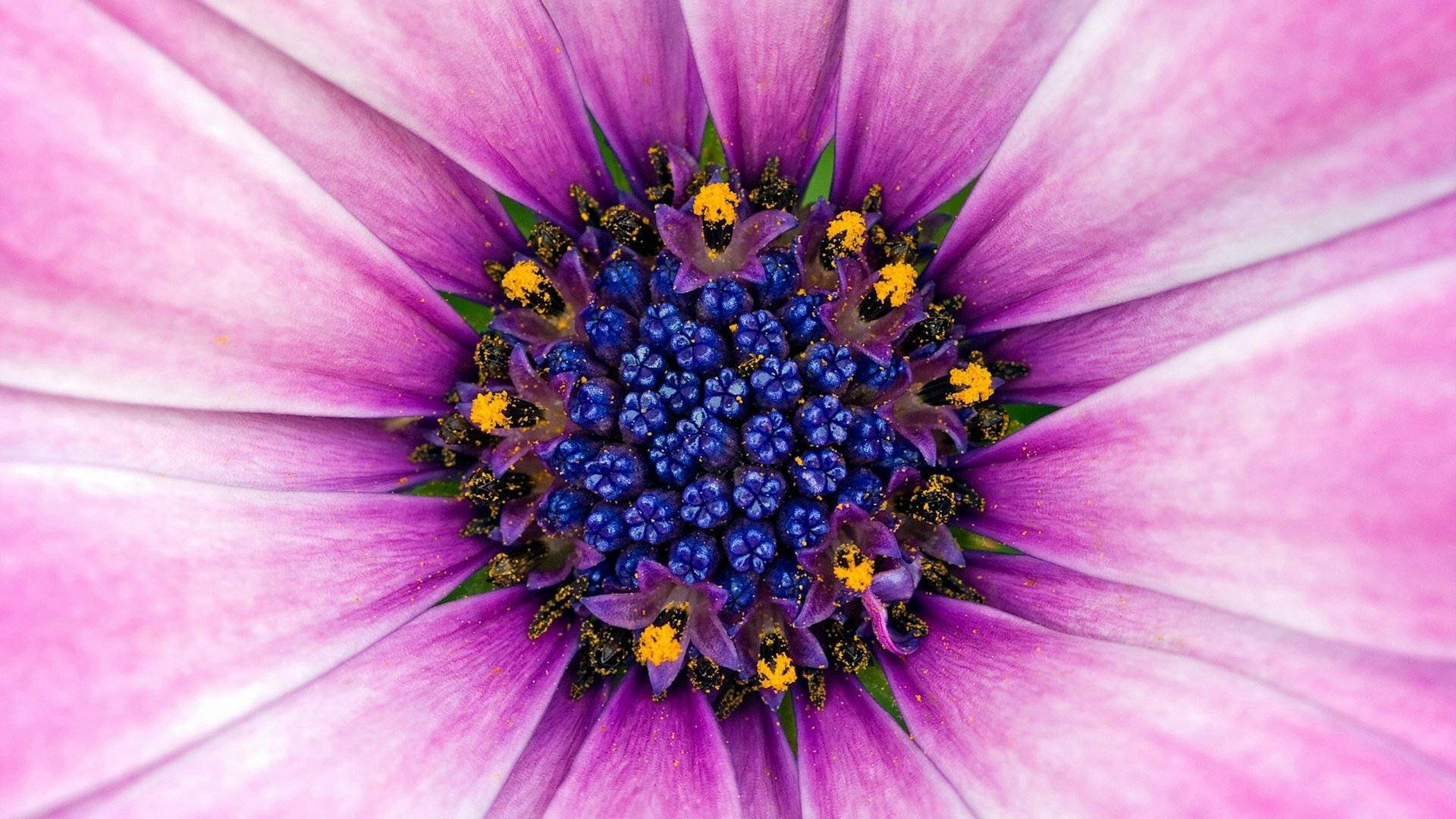 Flowers Macro HD Wallpapers
