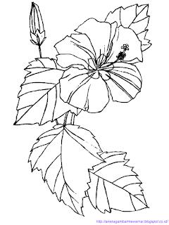 Gambar Bunga Sepatu 1