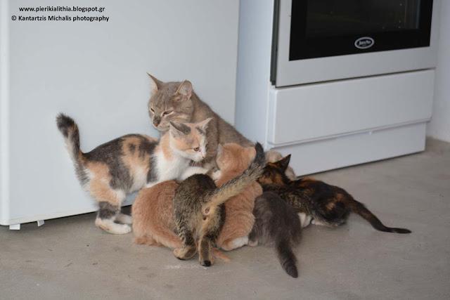 Μάνα είναι μόνο μία... (Τα γατάκια του Καπνικού Σταθμού)