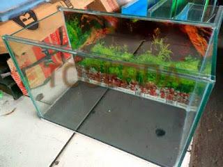 jual-aquarium-kaca.jpg