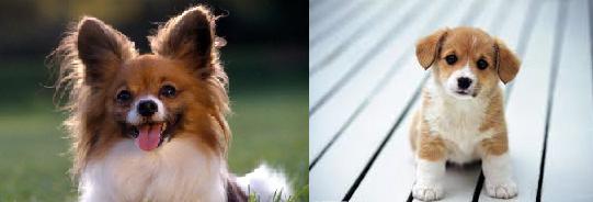 Köpeklerde-diyare