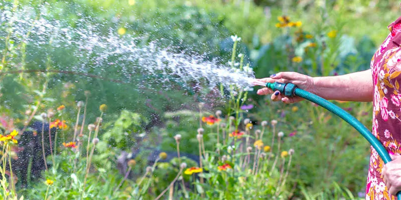 How To Choose The Best Lawn Sprayer