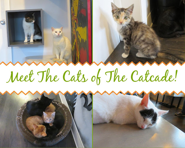 The Catcade|Cat Cafe