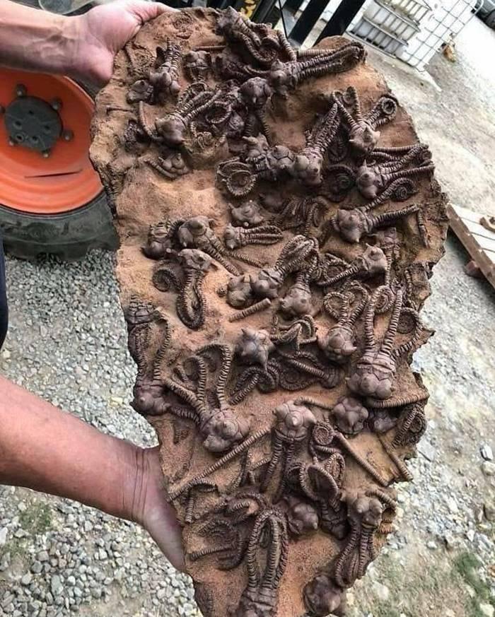 Sea fossils of some ancient sea molluscs