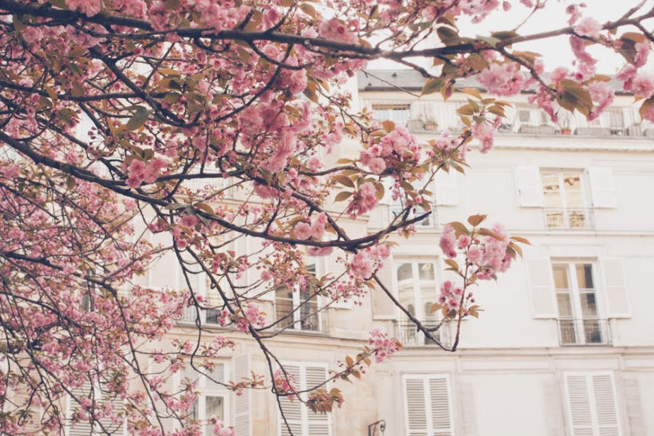paris, spring, equinox, cherry blossoms