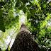 CENTRO DE BIOTECNOLOGIA QUER CRIAR NOVO POLO INDUSTRIAL NO AMAZONAS