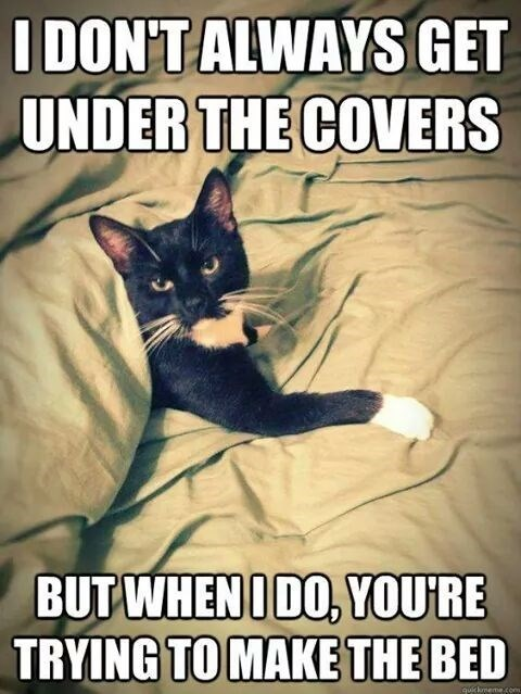 10+ Hilarious Cat Memes That Are Totally Worth Looking At