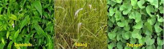 www.herbalpenawar.com - isman - agen HPAI