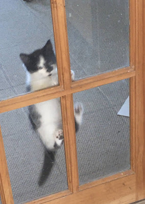 photo of small black and white kitten climbing up a glass panelled interior door, kitten is clinging to the second frame up