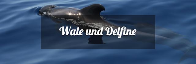 Wale und Delfine auf den Kanaren