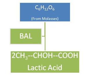 Lactic acid preparation from molasses.