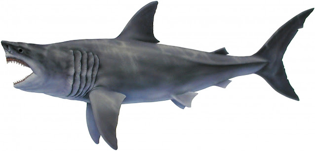 Megalodon may have been bigger than previously thought