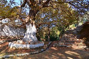 Danakos - Naxos (3)