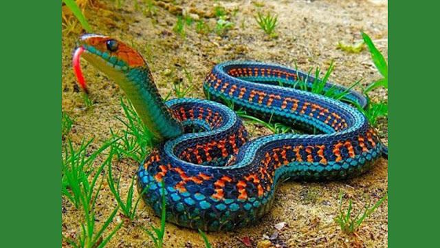 [Imagen: serpientes.jpg]